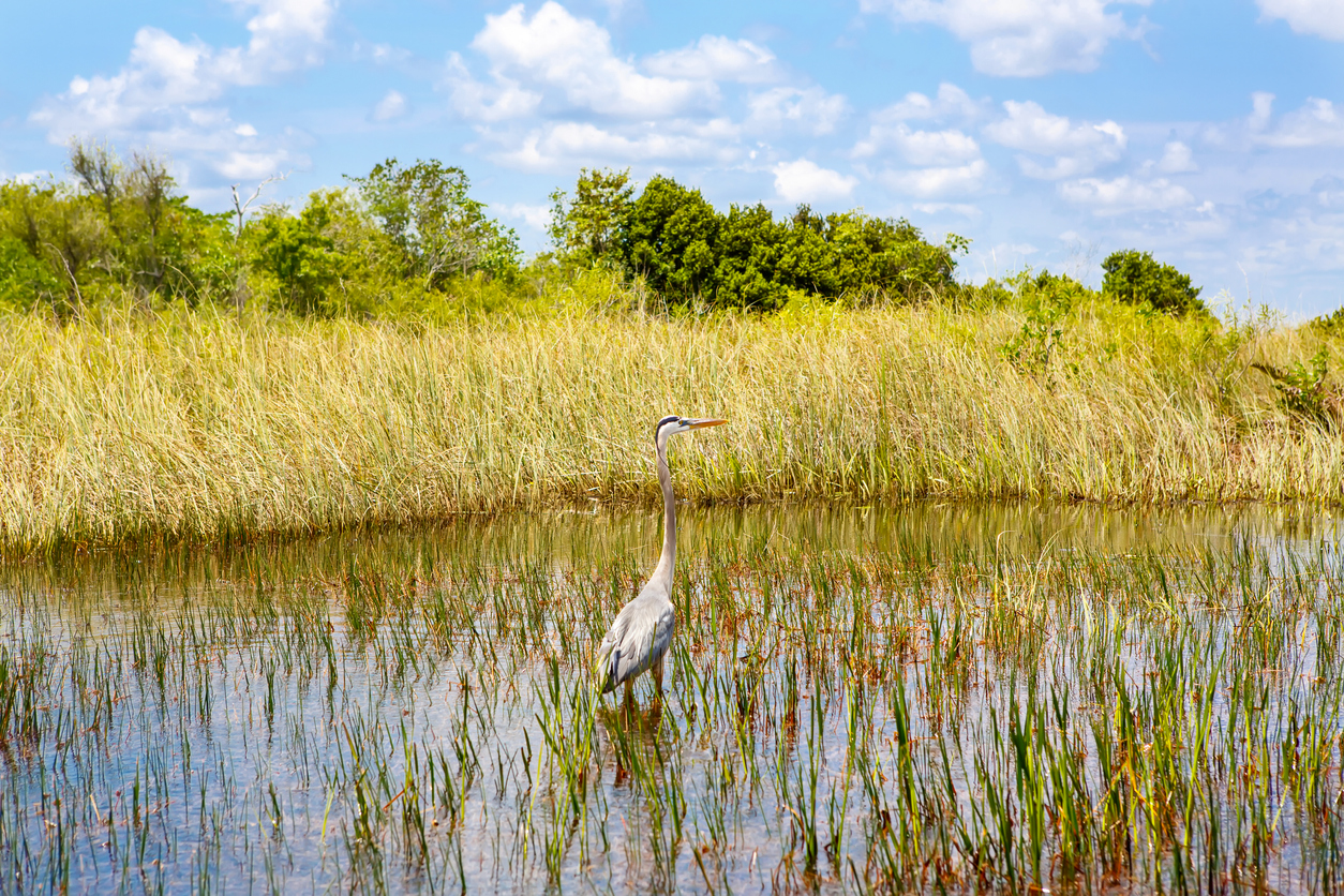 Animals of our creeks, rivers and marshes